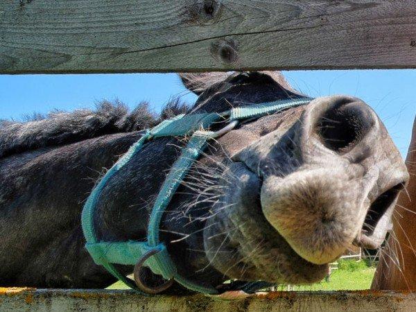 Пони и конные прогулки