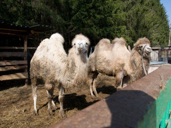 Мини-зоопарк и живой уголок