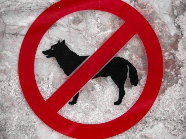 Запрещено размещение с животными!