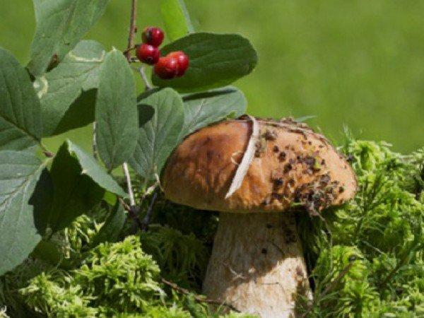 Походы за грибами и ягодами