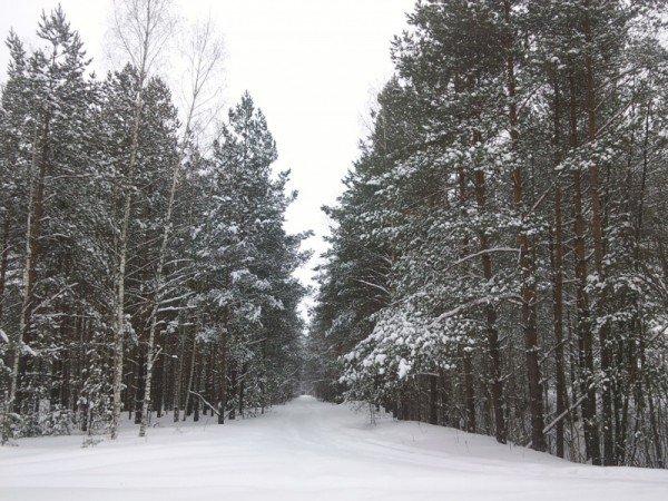 Лыжный отдых и каток