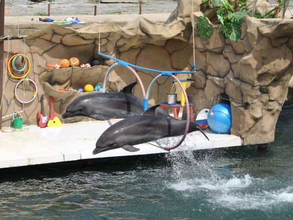 Экскурсия в дельфинарий на мысе Большой Утриш