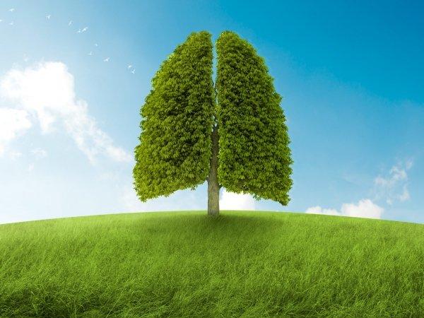 Дыши свободно: восстановление после COVID-19
