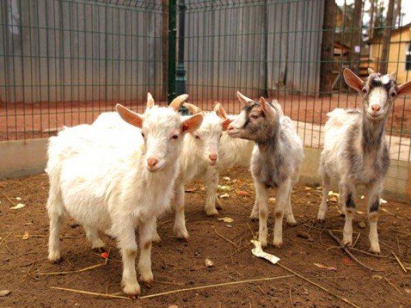 Мини-ферма